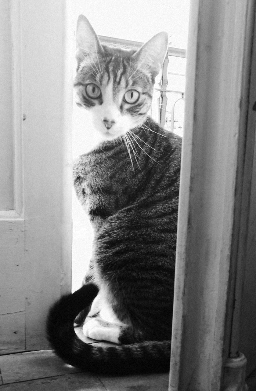 domestic cat, pets, domestic animals, mammal, cat, animal themes, indoors, feline, one animal, home interior, window, window sill, sitting, looking at camera, portrait, no people, day, close-up