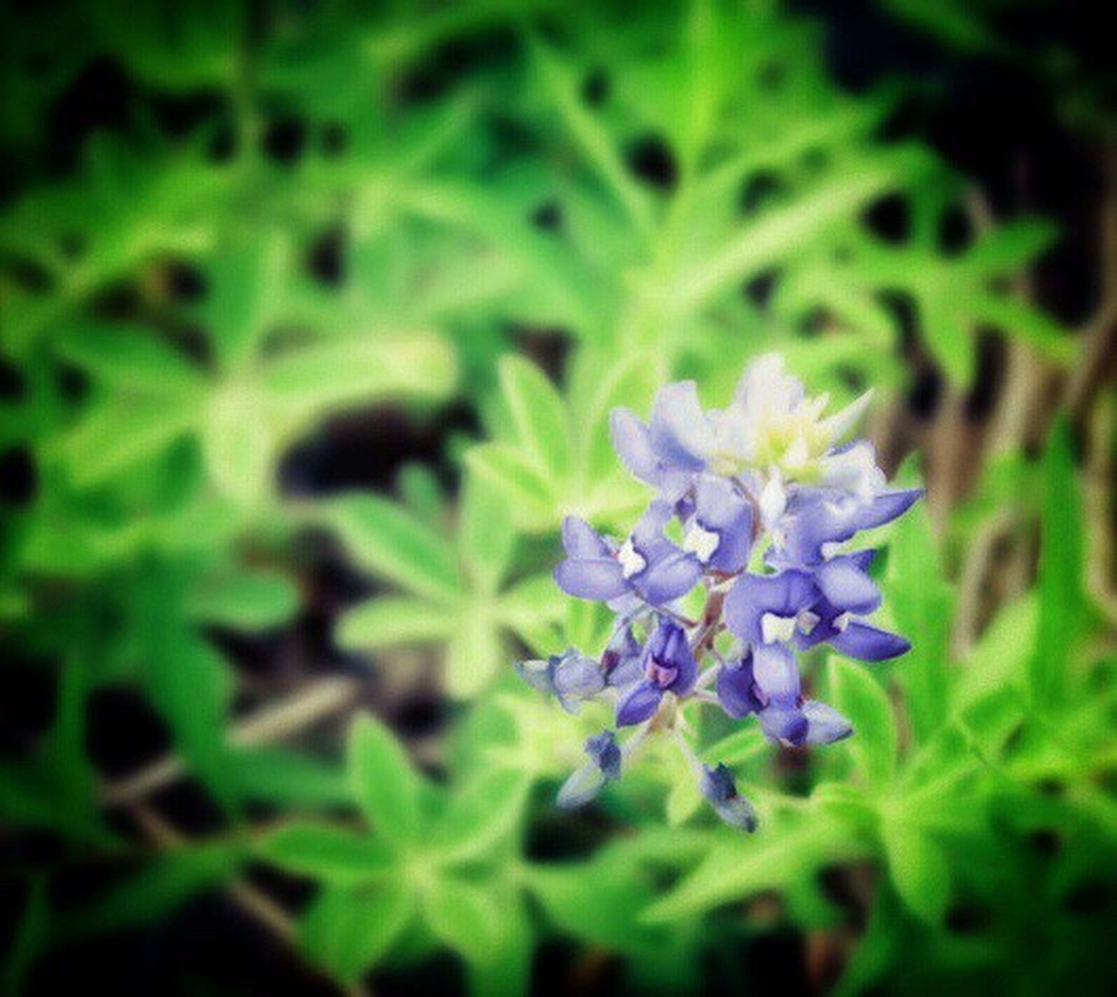 flower, growth, freshness, fragility, plant, purple, petal, beauty in nature, close-up, nature, green color, flower head, blooming, focus on foreground, leaf, selective focus, in bloom, no people, outdoors, day, botany, green, blue, growing, tranquility, softness