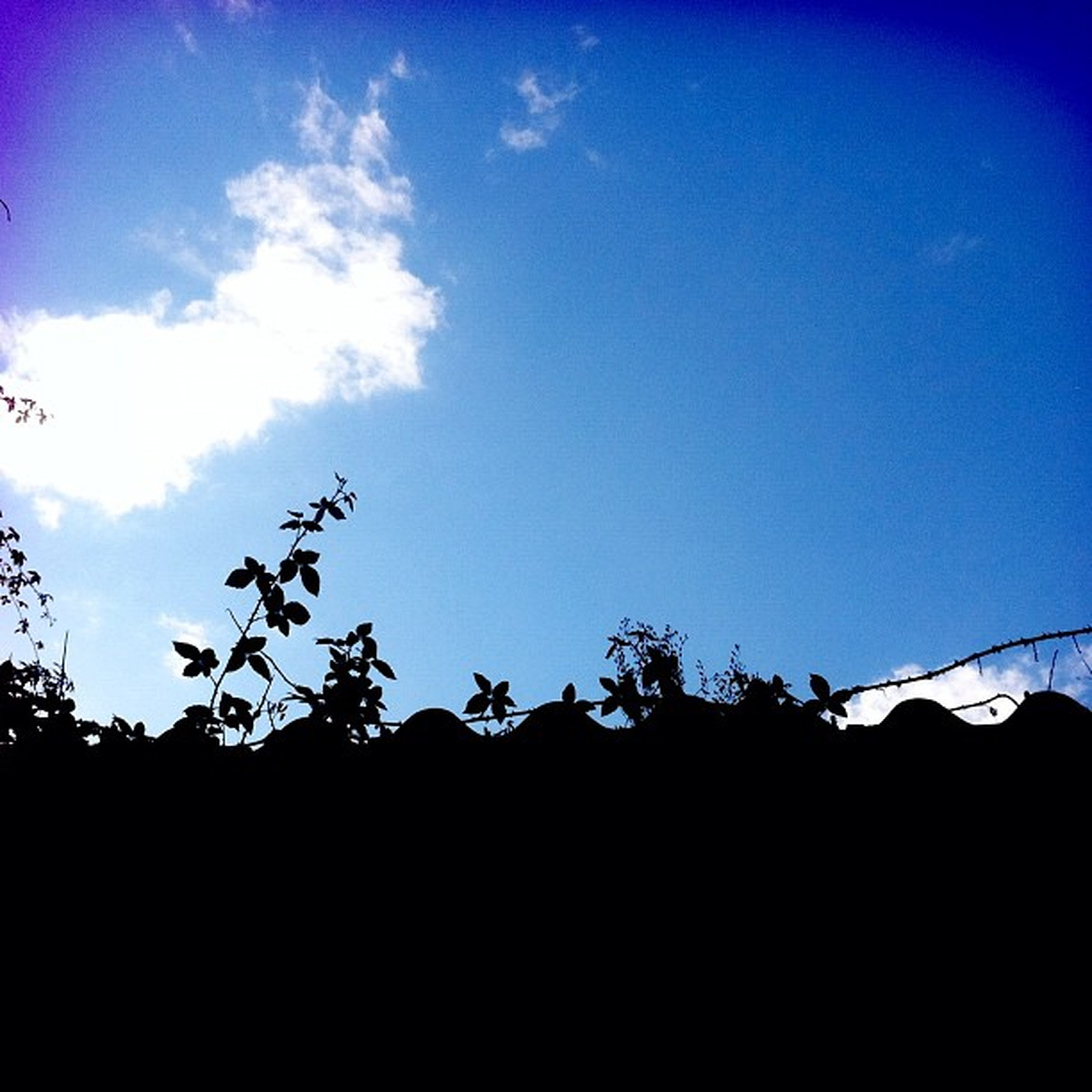 blue, low angle view, silhouette, copy space, tranquility, clear sky, sky, nature, beauty in nature, tree, tranquil scene, growth, scenics, outdoors, landscape, plant, dusk, no people, field, idyllic