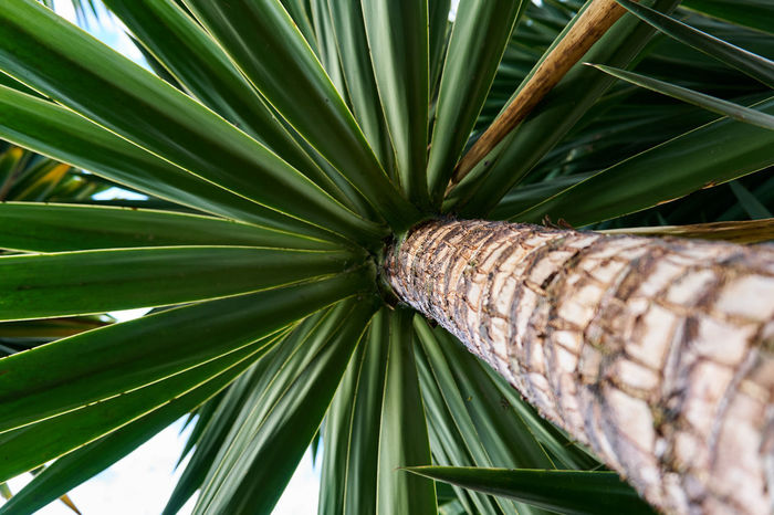 Backgrounds Beach Life Close-up Day Fronds Green Low Angle View Nature No People Outdoors Palm Palm Tree Paradise Pure Relaxation Sustainability Travel Tree Tree Tropical Trunk Vacation Wallpaper Perspectives On Nature