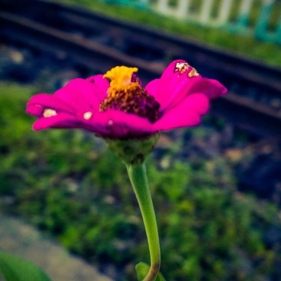 Pink flower..!! Ultimatecolor Lumia930