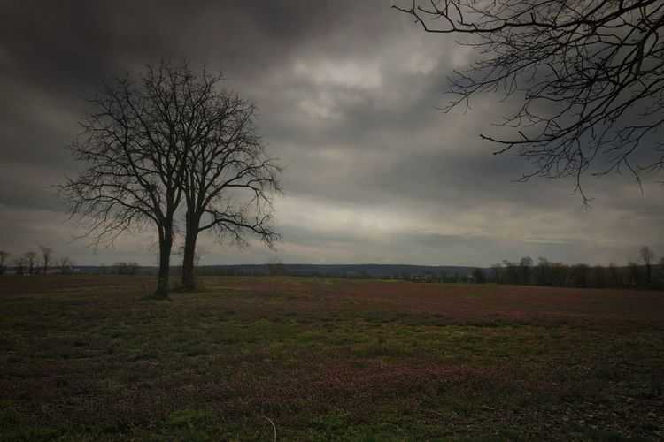 Lonely tree Sombre Somber Lonely Tree Tree Landscape Bare Tree Rural Scene Nature Cloud - Sky Field Dramatic Sky Melancholic Landscapes Landscape_Collection Nature_collection