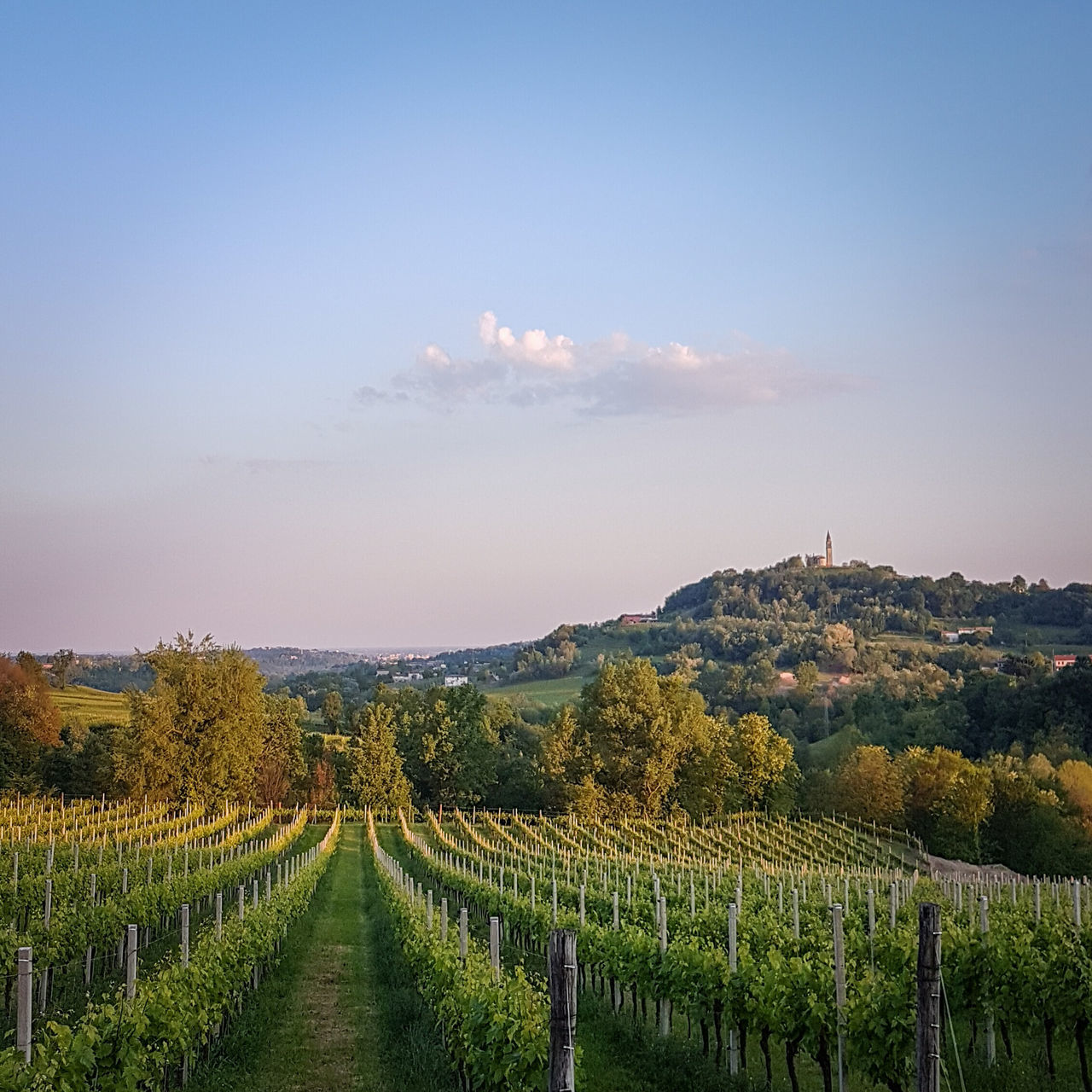 The Great Outdoors With Adobe Vineyards  Proseccosuperiore Proseccohills Landscape Sunset Sunset #sun #clouds #skylovers #sky #nature #beautifulinnature #naturalbeauty #photography #landscape