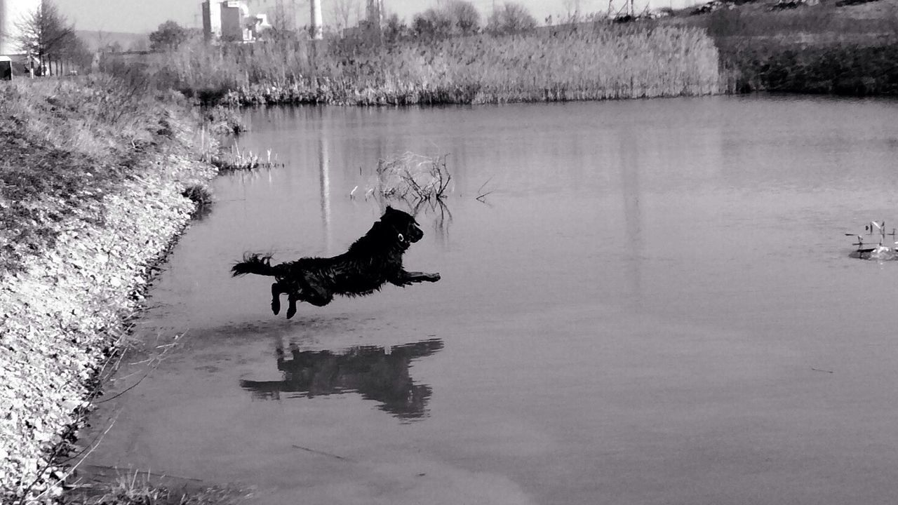 Orki... Black & White Dogs Dog I Love My Dog