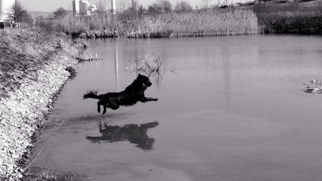 Orki... Black & White Dogs Dog I Love My Dog