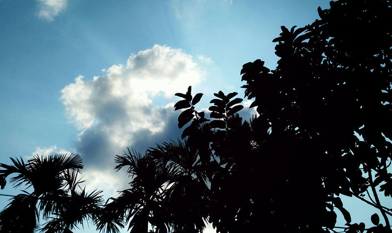 Sky Cloud - Sky Day Outdoors Nature Beauty In Nature Low Angle View Tree Blue And White Sky