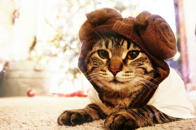 Kaiah is ready for The Force Awakens. Kitty Life Taking Photos EyeEm EyeEm Best Shots Tadaa Community Bokeh Best Christmas Lights