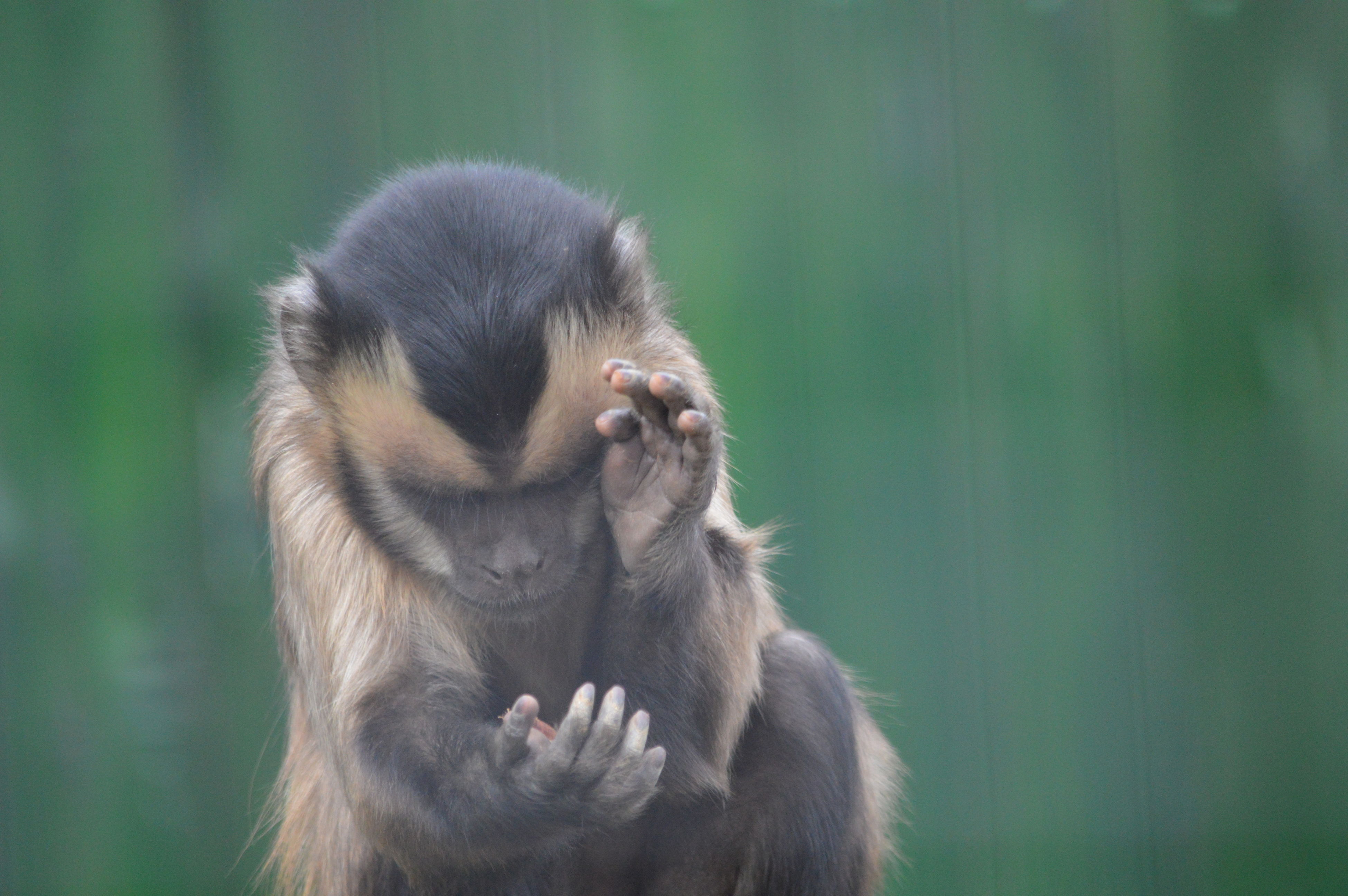 Clapping Animal Themes Animal Wildlife Animals In The Wild Clappig Mammal Monkey Nature No People