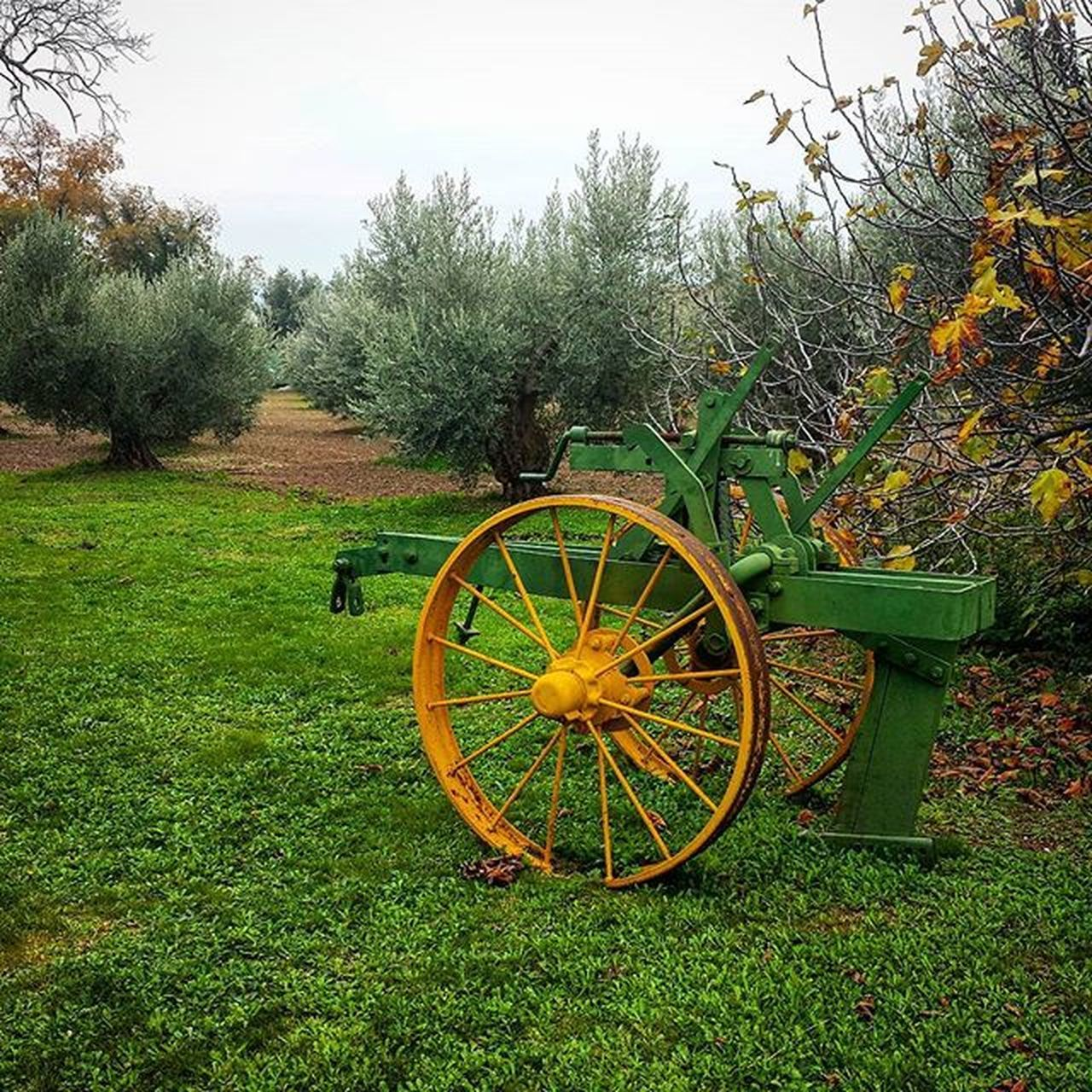 green color, wagon wheel, tree, field, no people, growth, day, wheel, nature, old-fashioned, grass, outdoors, beauty in nature, tranquility, plant, sky