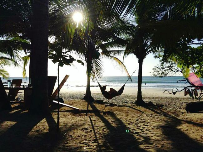 Palm Tree Tree Trunk Beach Tranquility Vacations Water Sea Sunlight Sun Tranquility Paraíso Wave Ocean Palm Contrast Of Shadows Contrast And Lights Relaxing Relaxing Moments HamacaParaguaya👌👍🔯 Hamaca Costarica Playa Costa Rica Tamarindo Avellanas