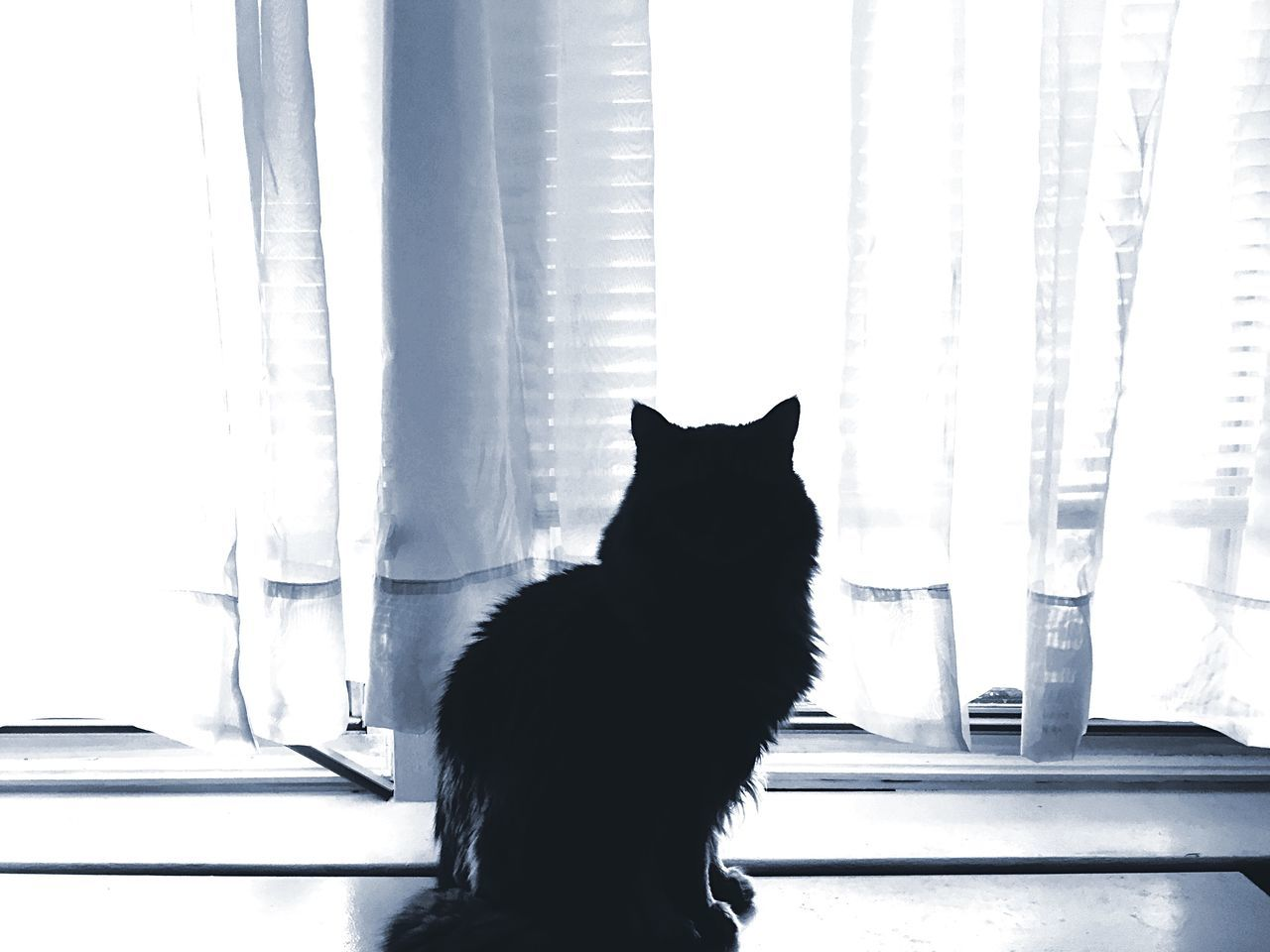 Beautiful stock photos of window, Animal Themes, Black Cat, Black Color, Curtain