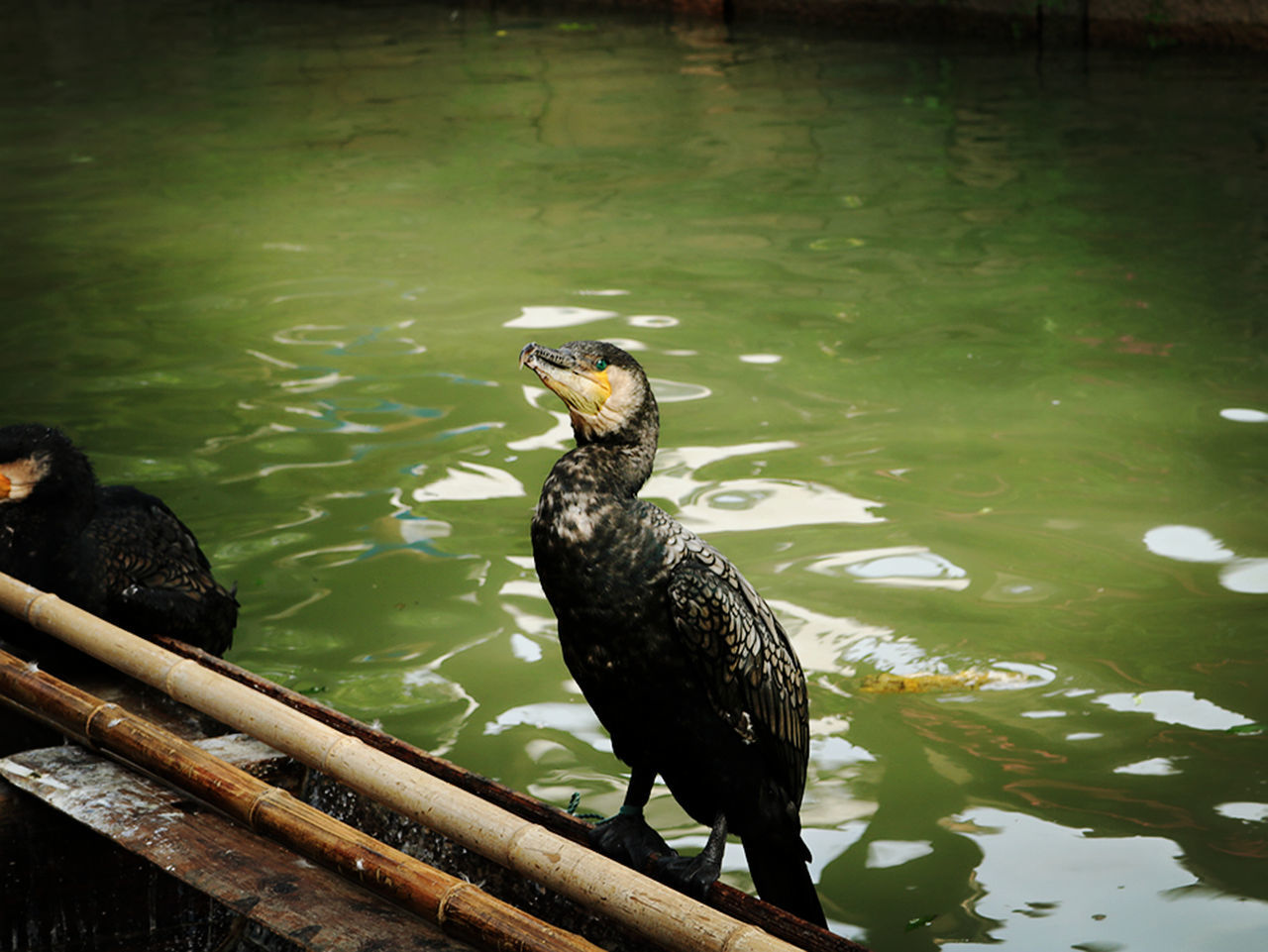animal themes, bird, water, animals in the wild, one animal, animal wildlife, no people, lake, nature, day, outdoors, beauty in nature, perching