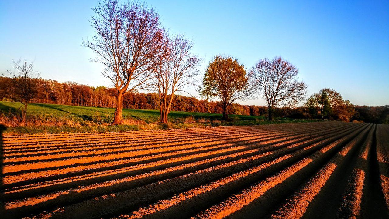 Spargelfelder im Abendlicht... Agriculture Rural Scene Field Growth Day No People Outdoors Tree Nature Sky Food Wendland GetbetterwithAlex Originalpicture Beauty In Nature