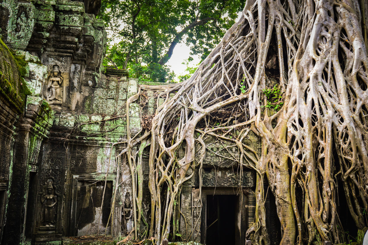 EyeEm Selects Ta Phrom Temple Siem Reap, Cambodia UNESCO World Heritage Site Banyan Tree Tree Roots  Tree Built Structure Architecture Tree Trunk Day No People Outdoors Growth Nature Building Exterior Close-up Reclaimed By Nature Travel Photography ASIA Travel Travel Destination