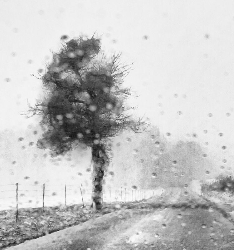 Nature Tree Outdoors Single Tree Blurred Photos. Blurred Visions Grey Color Black And White Melancholy Melancholic Landscape Rain