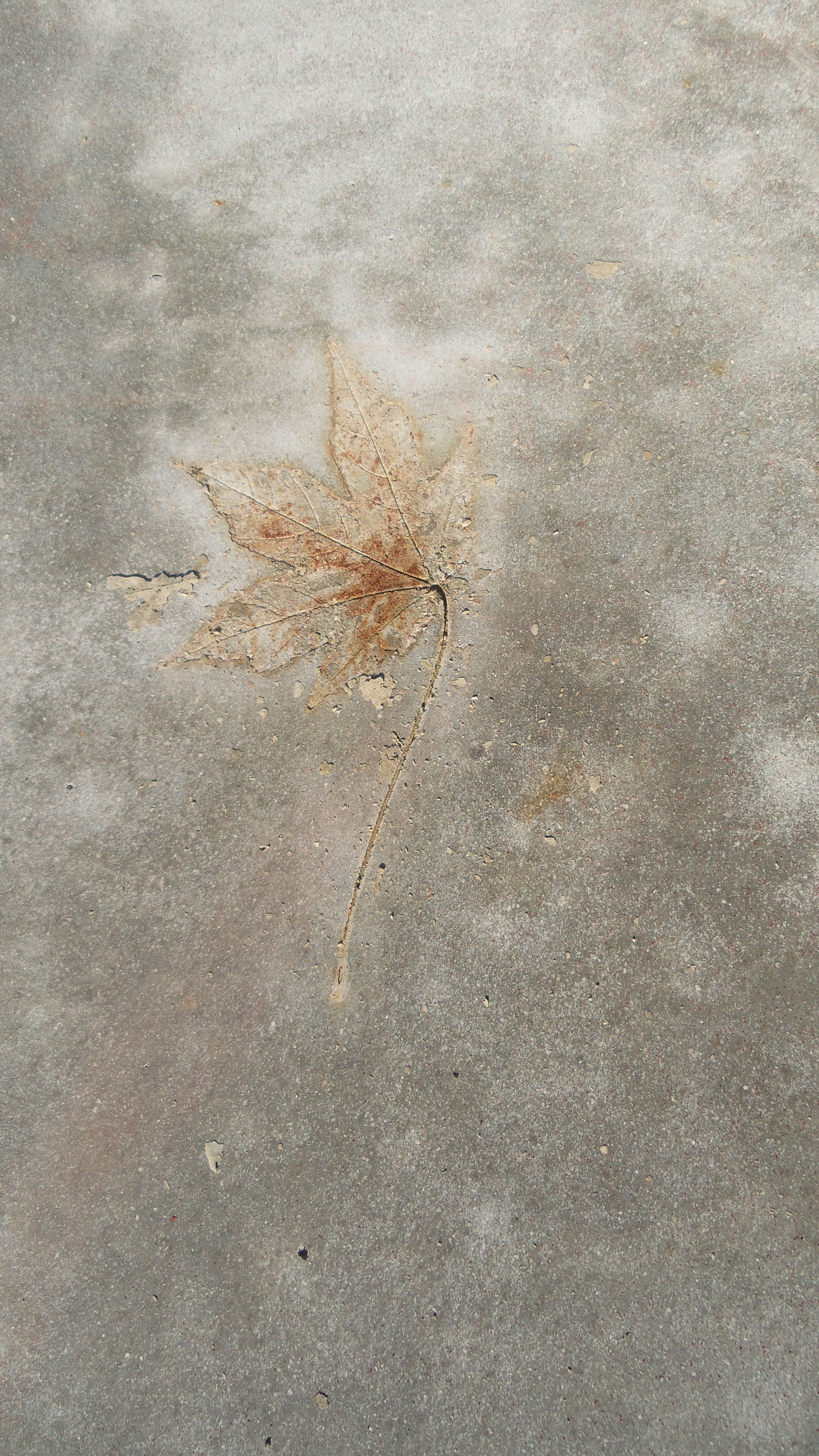 Textures And Surfaces maple leaf fell on fresh poured concrete, lift it off and it left its imprint on it....