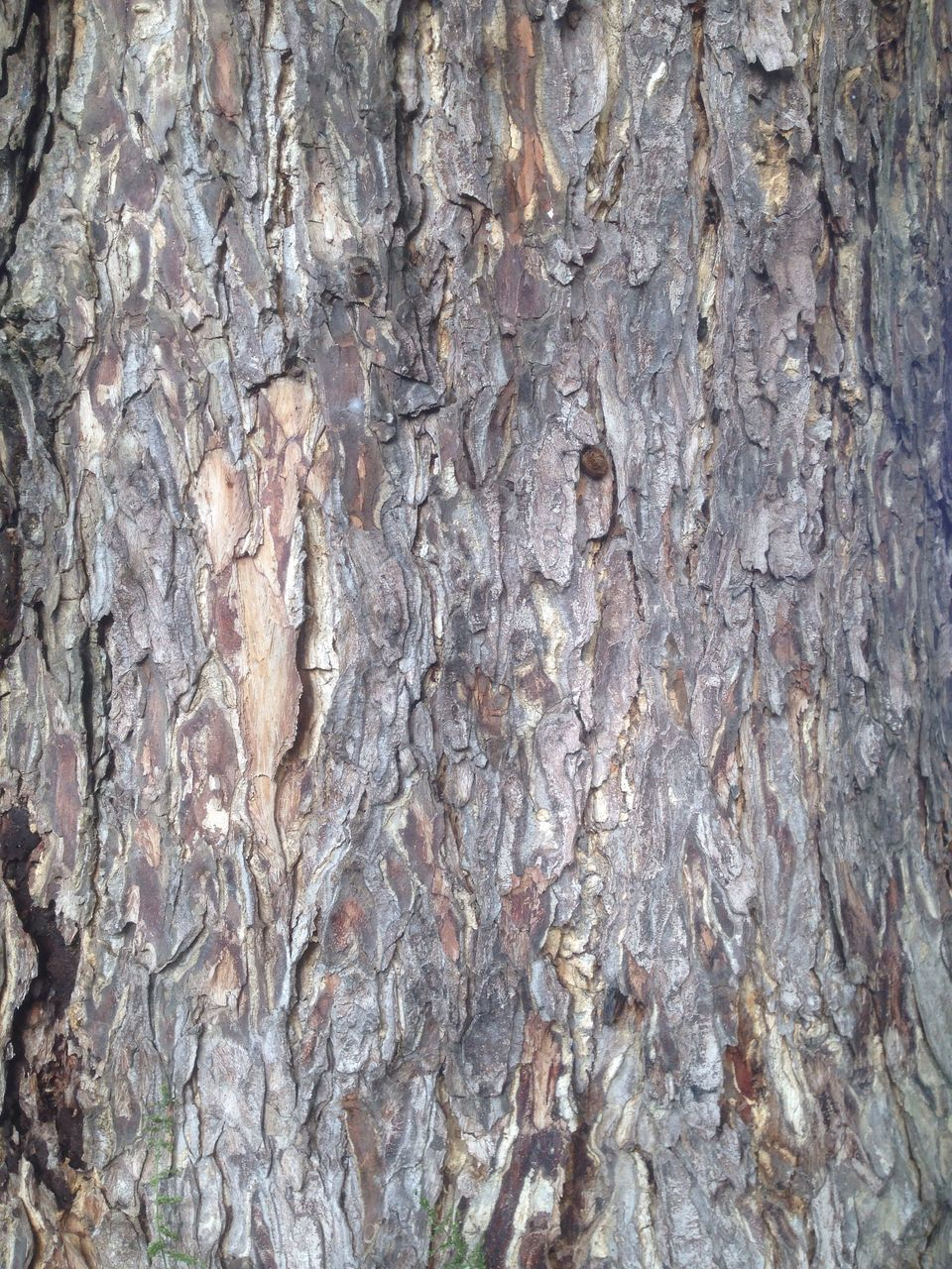 full frame, backgrounds, rock - object, textured, no people, nature, pattern, built structure, close-up, day, tree, indoors