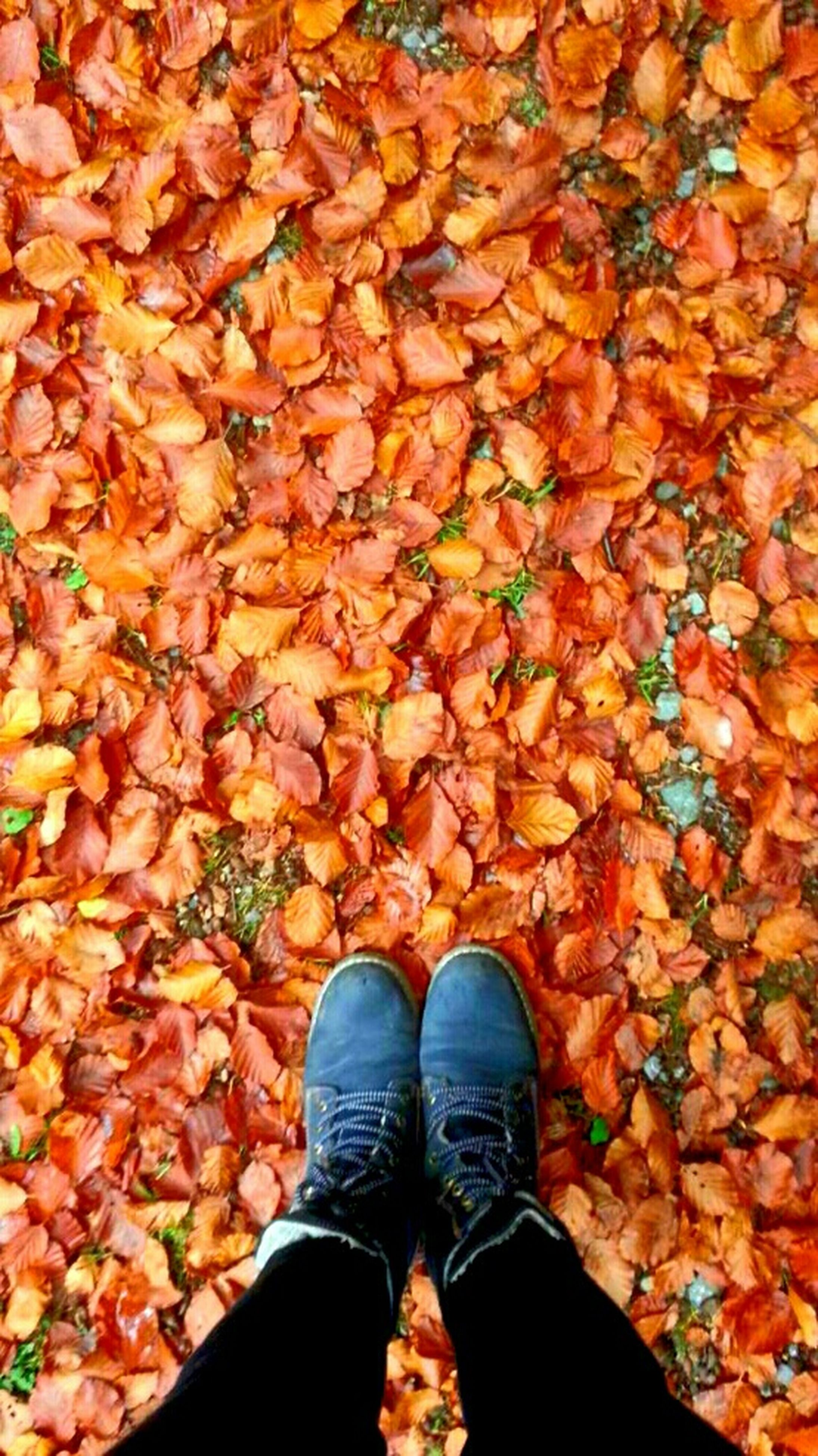low section, person, personal perspective, shoe, standing, autumn, lifestyles, leaf, high angle view, change, human foot, abundance, season, men, directly above, leaves, unrecognizable person
