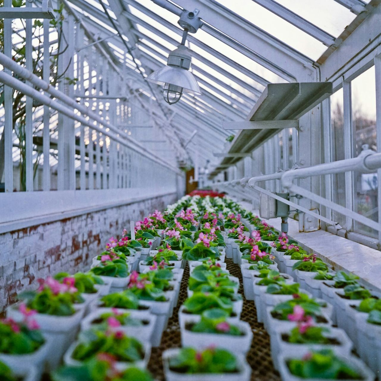 Spring flowers. Endlessness Flowers Greenhouse Urban Spring Fever Spring Growth Growing Film