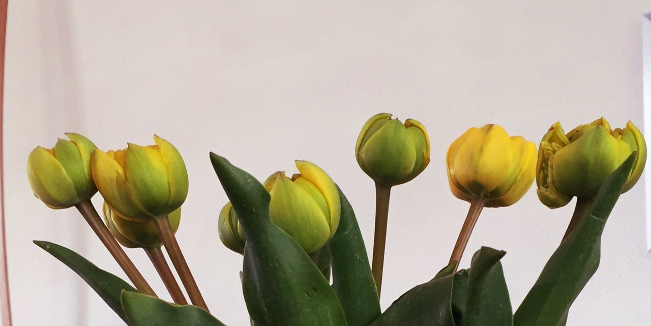 Beautiful stock photos of tulip, Stem, beauty In Nature, beginnings, bloom