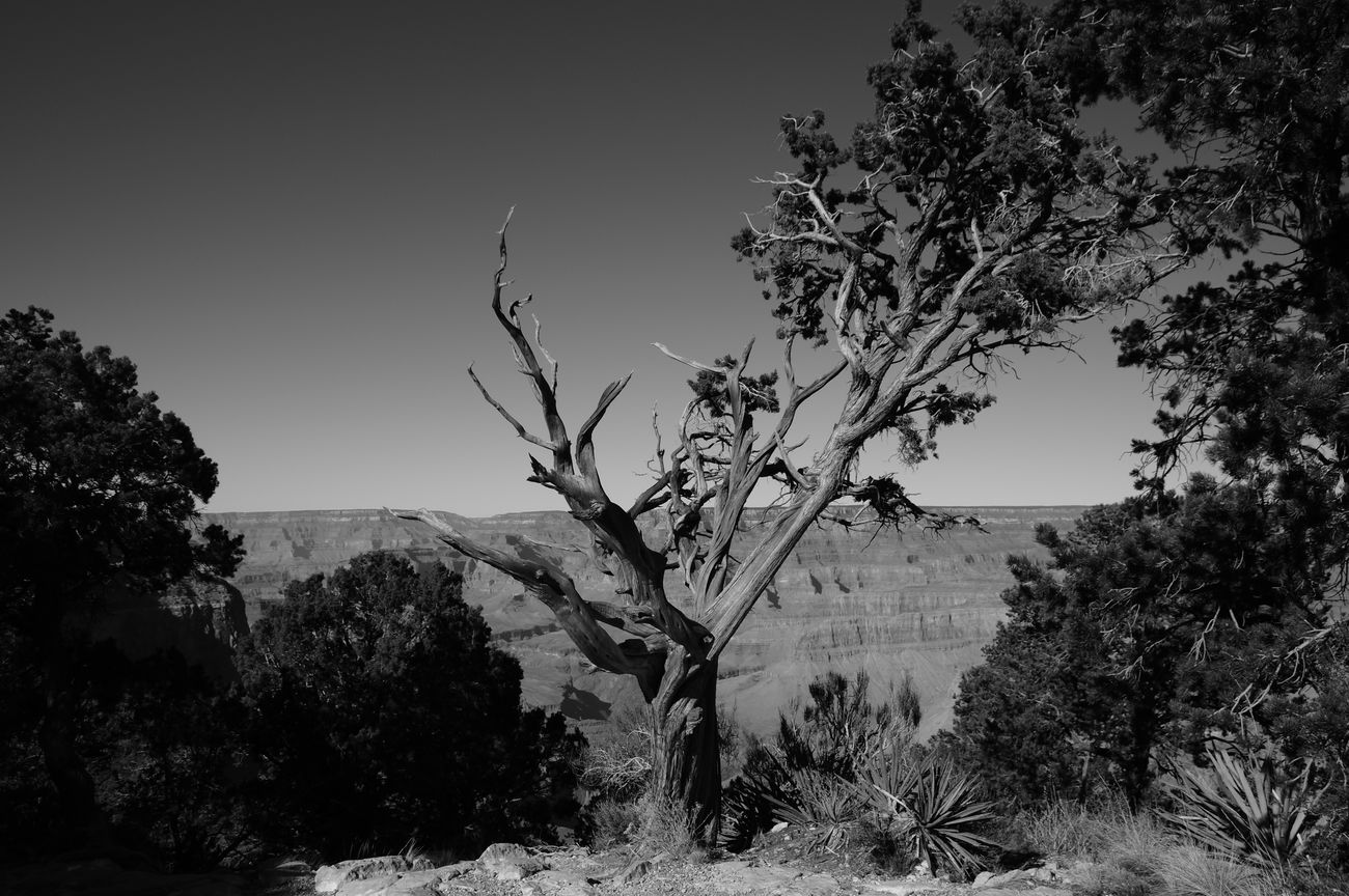 Arizona Beauty Beauty Of Decay Black And White Erosion Geography Grand Canyon Nature Nature No People Outdoors Plant Rock Sony A37 Tree