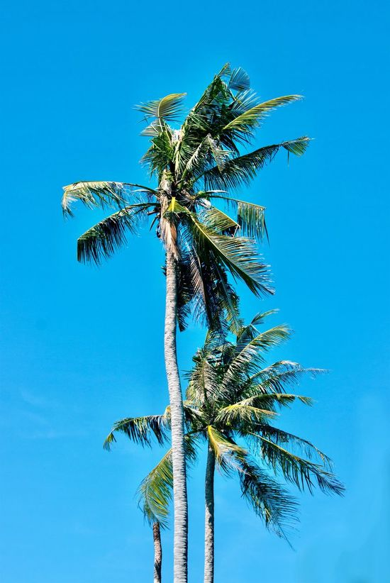 In the summertime Palm Tree Blue Clear Sky Outdoors Landscapes Travel Sunny Day Island Bright Daylight Tropical Paradise Summertime Beach