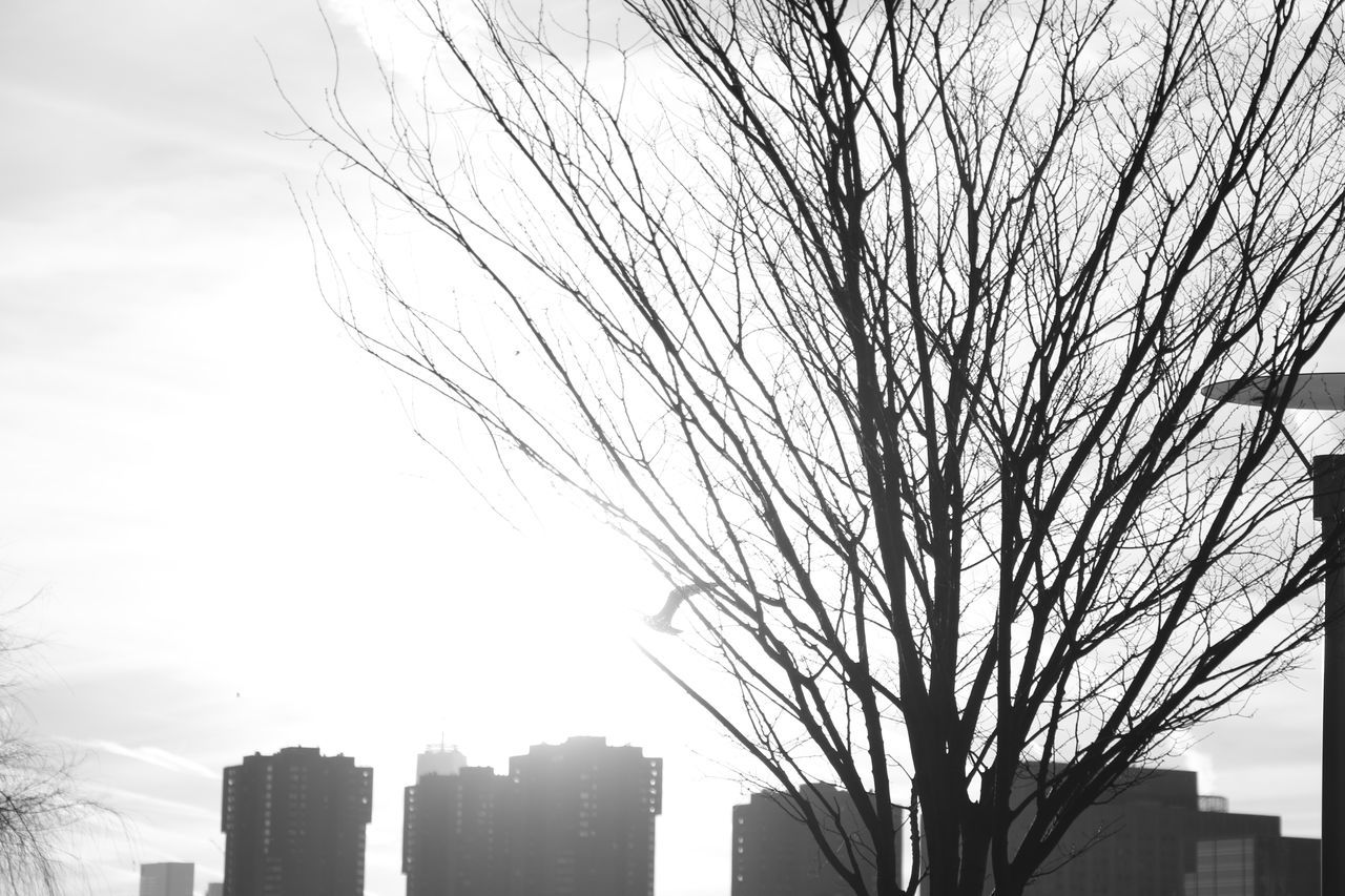 architecture, city, building exterior, built structure, skyscraper, bare tree, sky, modern, tree, no people, cityscape, outdoors, day
