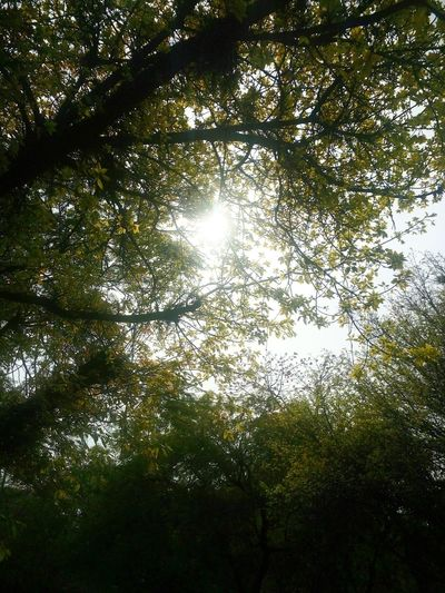ThroughTheLeaves Sunlight ☀ Noontime  Atthebusstop Delhiuniversity Delhischoolofeconomics Springisalmostover Ilovespringtime Makesmesad Bombax Tree is barely visible