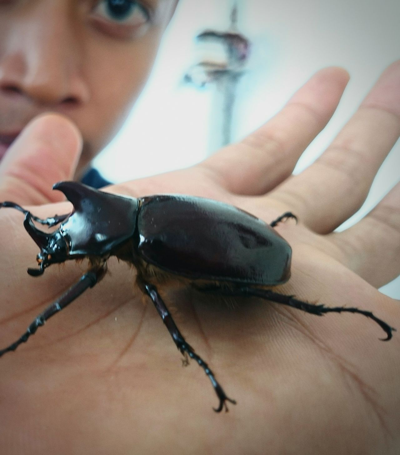 One Animal Animal Wildlife Insect Human Hand Close-up Day Animals In The Wild Scenics