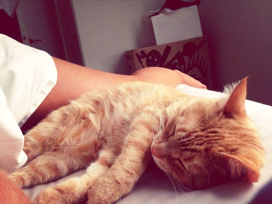 Love of my life. Tigerlou Cat Enjoying Life