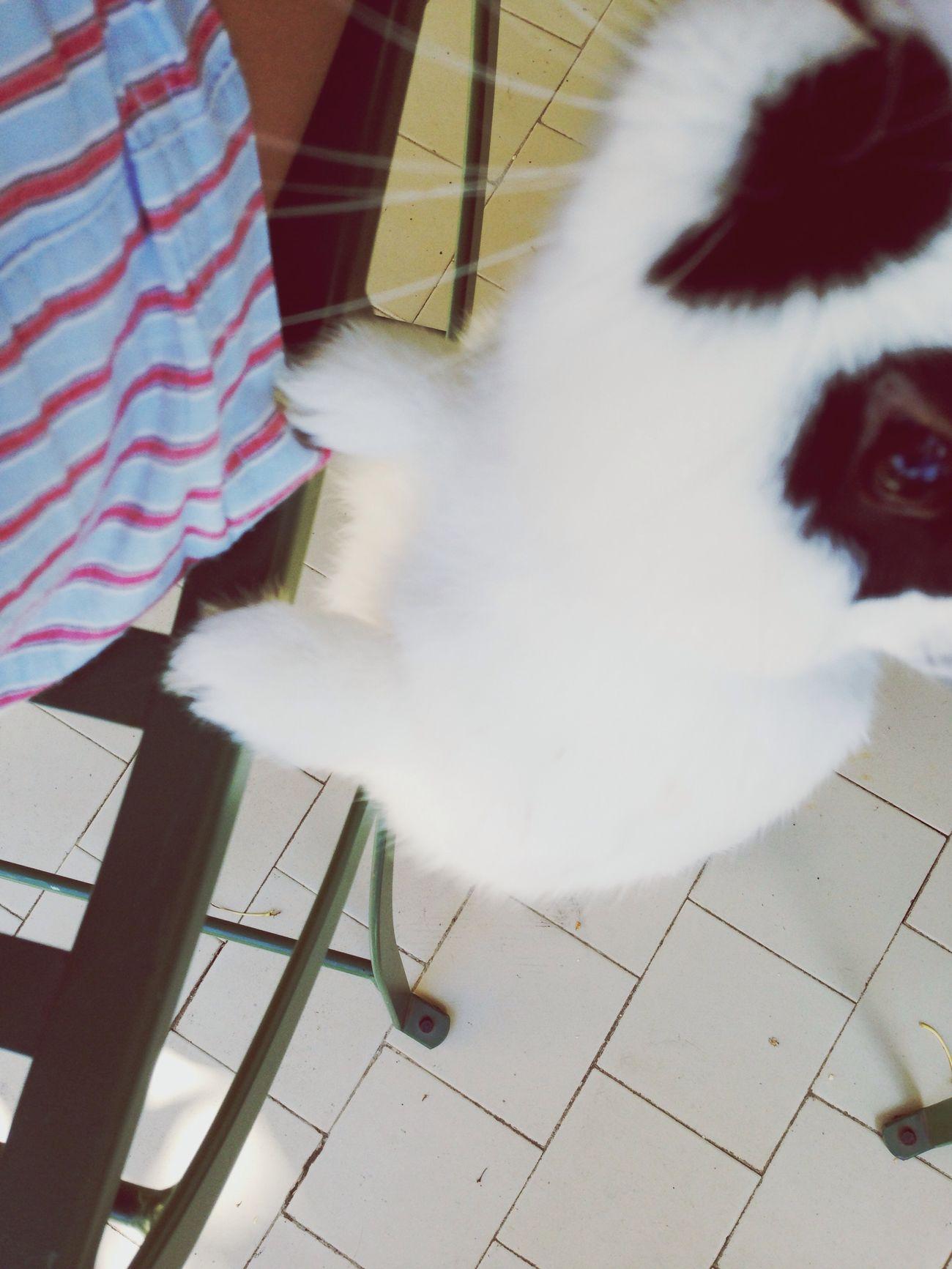 Nofoodforyou Mysmalllove Mr Rabbit