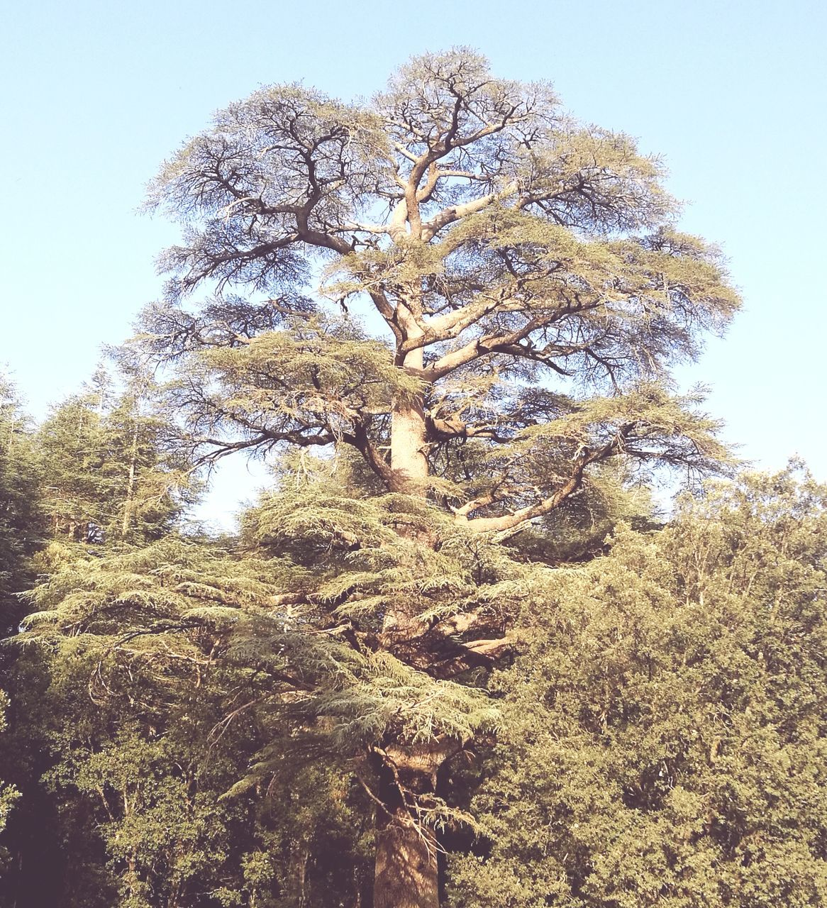 nature, tree, tranquility, beauty in nature, growth, no people, day, low angle view, outdoors, landscape, clear sky, sky