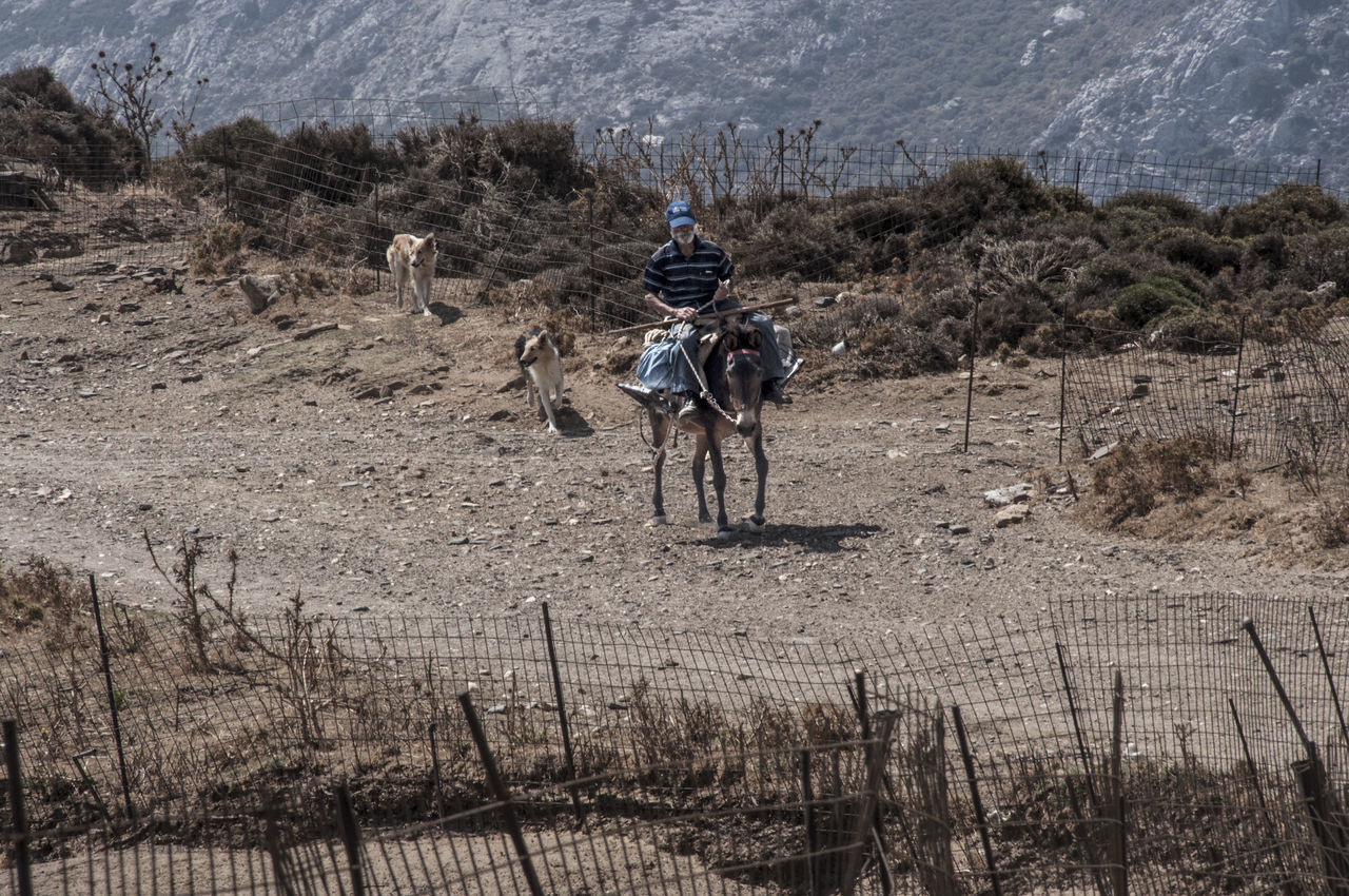 Donkey In The Mountains Lifestyle Photography Lifestyles Real People Riding Rural Life Rural Scene Rural Scenes Shepherd With Guide Dogs The Street Photographer - 2017 EyeEm Awards Transportation