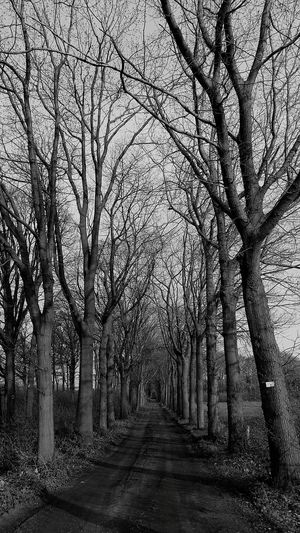 Blackandwhite Photography Blackandwhite Black&white Eyem Black And White EyeEm Best Shots Eyemphotography EyeEm Nature Lover EyeEm Best Edits EyeEm Gallery Memory Lane Nature Lane Nature Path Lane Holland Twente