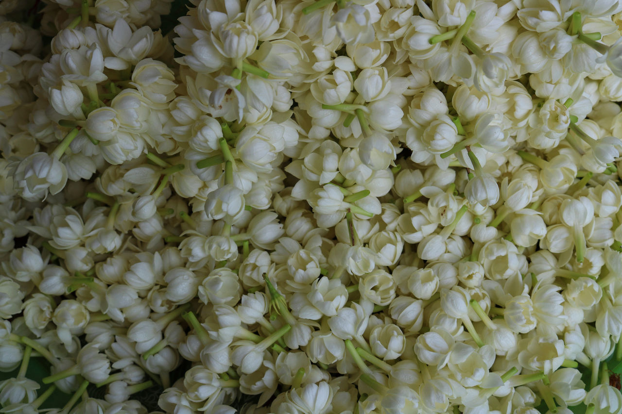 Jasmine Flower ASIA Asian  Backgrounds Beauty In Nature Bouquet Close-up Flower Flower Head Fragility Freshness Full Frame Growth Holiday Jasmine Jasmine Flower Love Mom Nature No People Outdoors Petal Textured  Thailand White Color