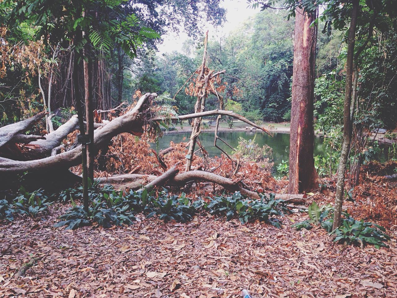 EyeEmNewHere Fallen Tree Tree Forest Nature Tranquility Tree Trunk Tranquil Scene Root Environment No People Scenics Outdoors Natural Disaster Day Bogor, Indonesia Botanical Gardens