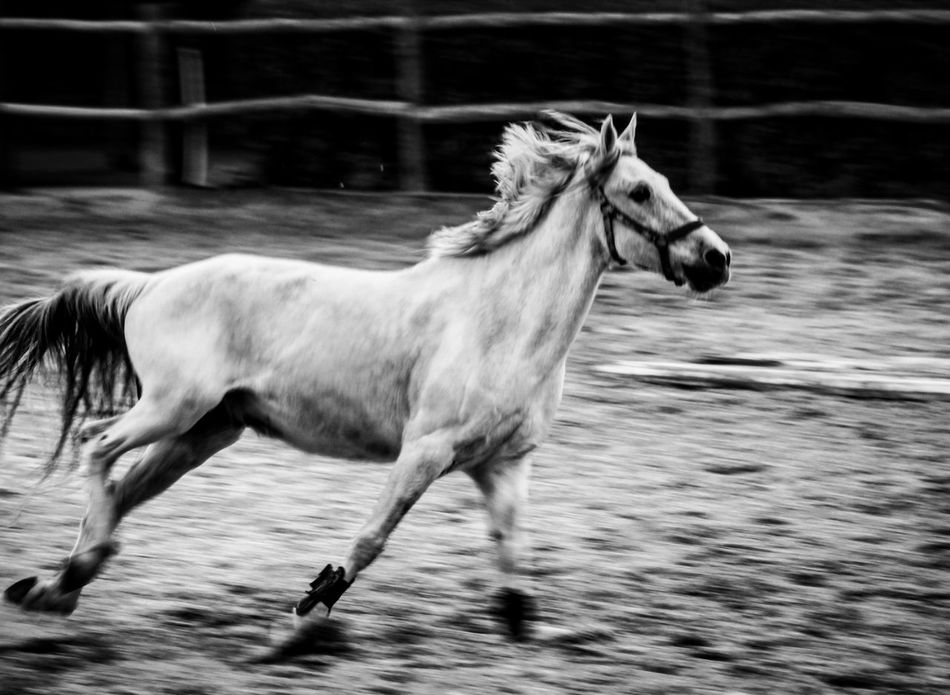 Beautiful stock photos of horse, Animal Themes, Day, Domestic Animals, Field