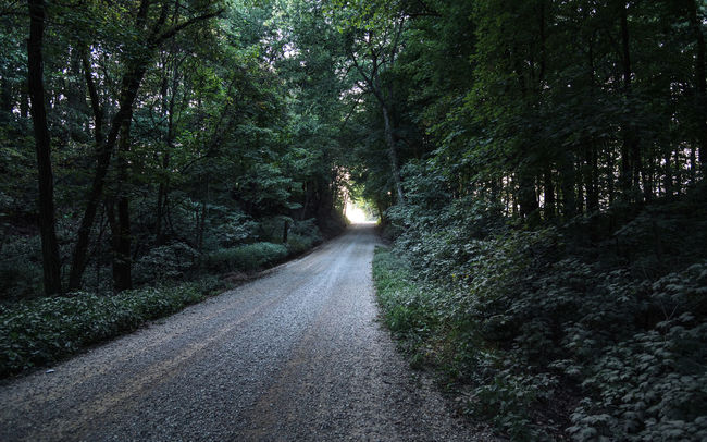 Composition Country Road Day Dusk Forest Geology Landscape Leading Middle Of Nowhere Mountain Narrow Non-urban Scene Outdoors Perspective Relaxing Moments Remote Road Rock Rock Formation Speck Of Light The Way Forward Tranquil Scene Tranquility Tree