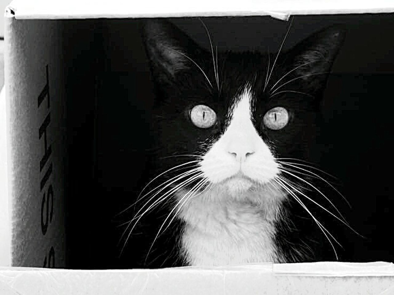 Cat in a box Black N White Cat In Box