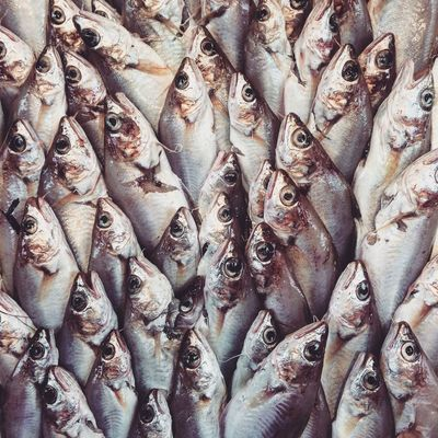 Abundance Seafood Raw Food Fish Market Food Freshness Backgrounds Food And Drink Healthy Eating Full Frame Business Large Group Of Objects Large Group Of Animals Market Eeyem Followers Foodphotography Foodstylist Flatlaystylist Seafood Market Eeyem Market EyeEm Nature Lover EyeEm EyeEm Best Shots