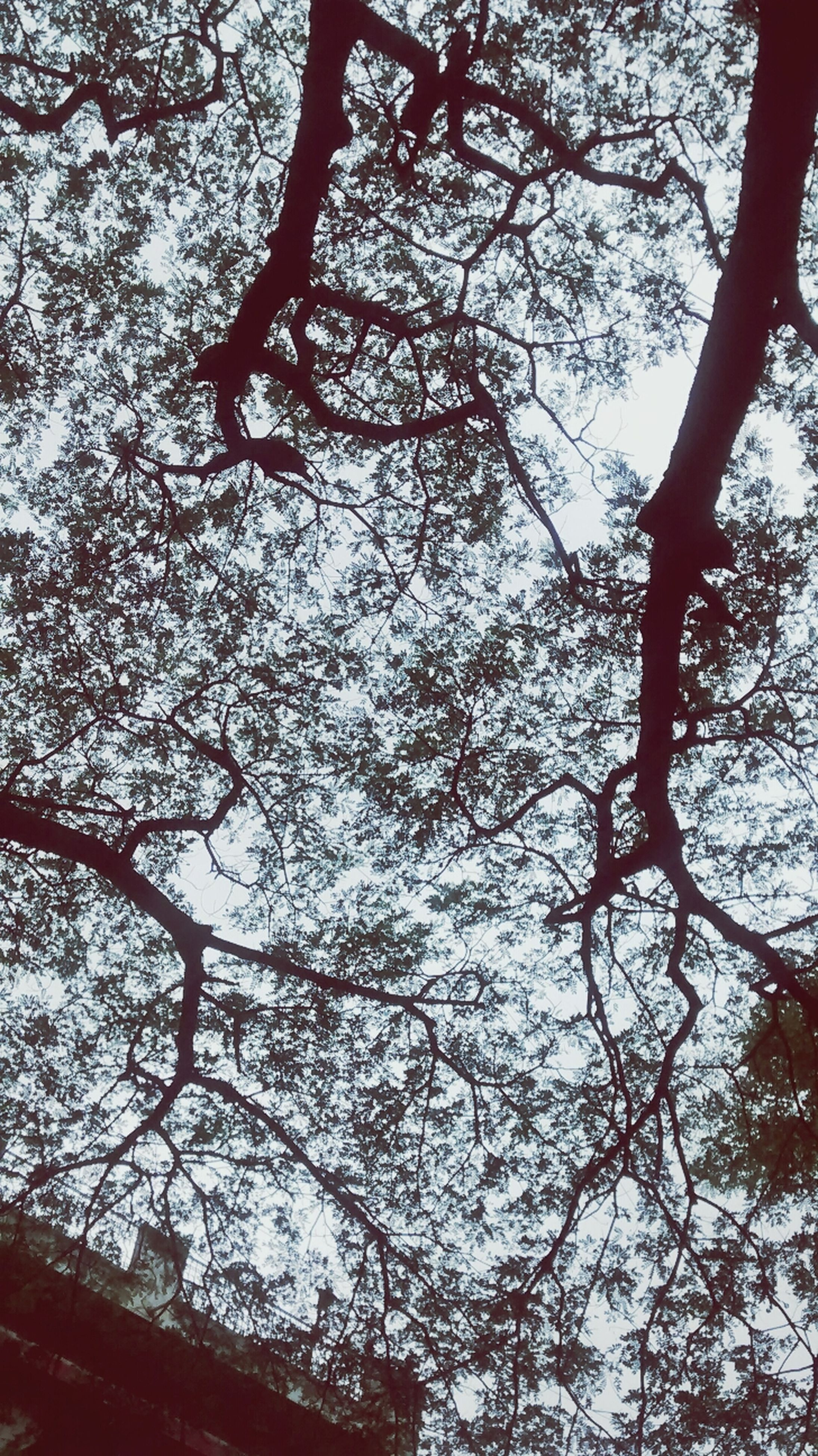 tree, branch, low angle view, bare tree, tree trunk, growth, nature, tranquility, sky, beauty in nature, silhouette, day, no people, outdoors, scenics, tranquil scene, forest, clear sky, backgrounds, full frame
