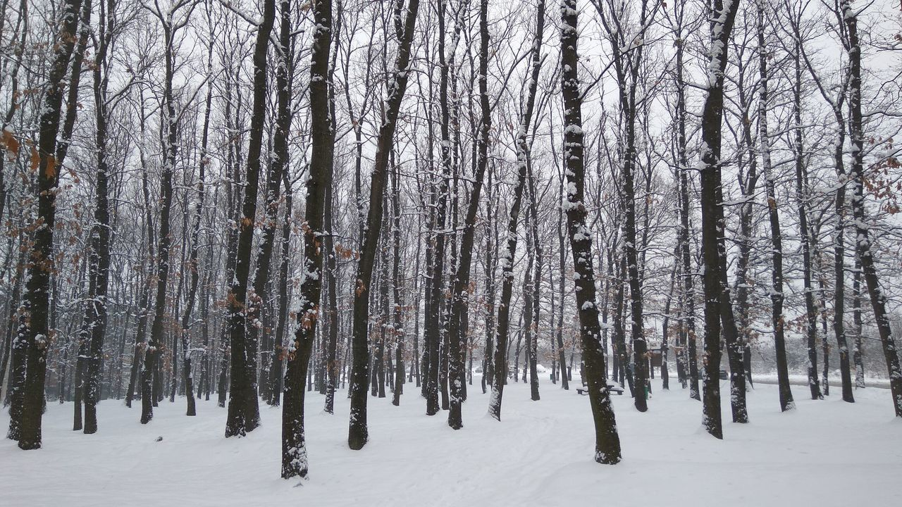 Tree Winter Snow Nature Forest Beauty In Nature Cold Temperature No People Growth Tree Trunk Sky Scenics Day Tranquility Outdoors Landscape Freshness Birch Tree