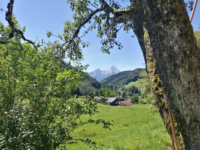 Tree Mountain Nature Landscape Beauty In Nature Outdoors Agriculture Growth Scenics Plant Rural Scene Mountain Range Travel Destinations Berchtesgaden Alps Watzmann Watzmann View EyeEmSelect