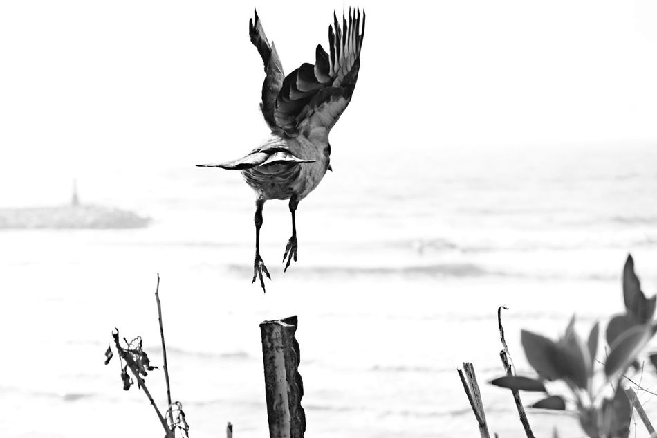 To be free you have to let go. Sea Bird Water Nature Animal Themes Day Spread Wings Beach Outdoors No People Sky Animals In The Wild Beauty In Nature Flying High Welcome To Black