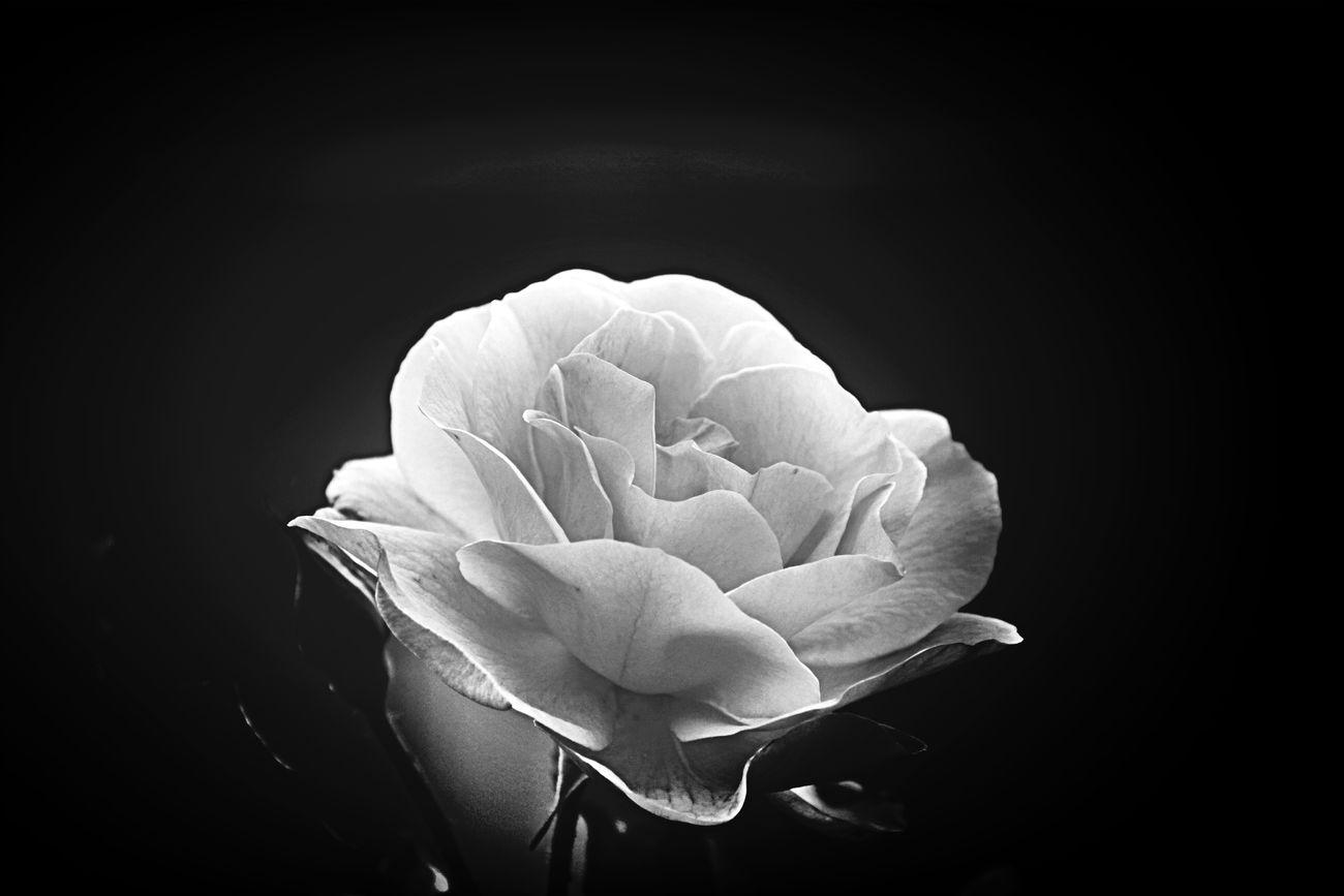 Sans épine continuer a vivre......... Hanging Out Bnw Flowers