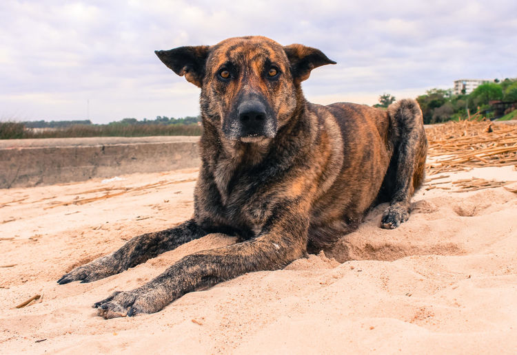 Teofilo. Colonia de sacramento, Uruguay Animal Themes Beach Beach Life Colonia De Sacramento Day Dog Domestic Animals Looking At Camera Mammal Nature Pets SA Sand Uruguy