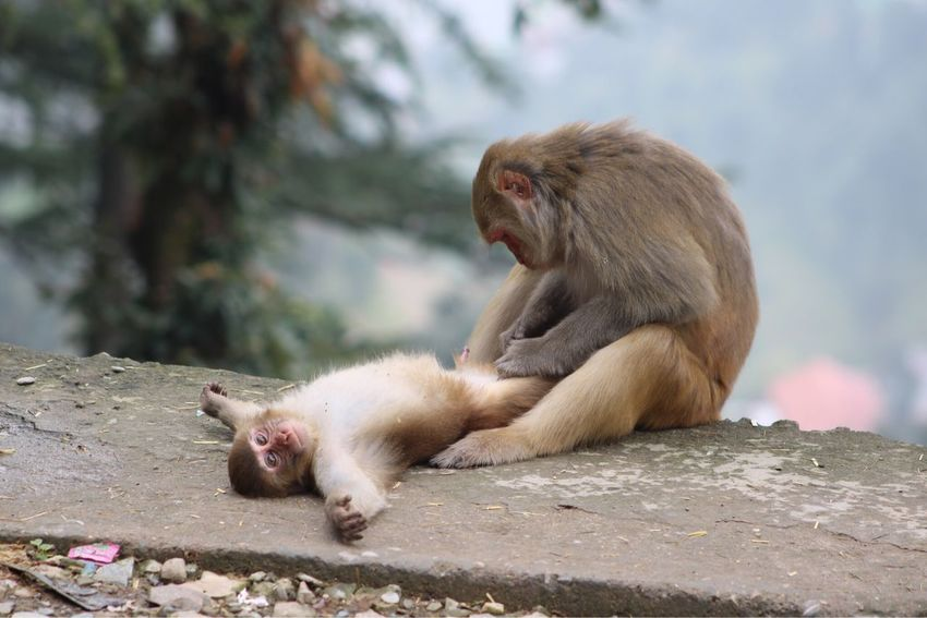 Perspectives On Nature EyeEm Selects Rhesus Macaque Monkeys