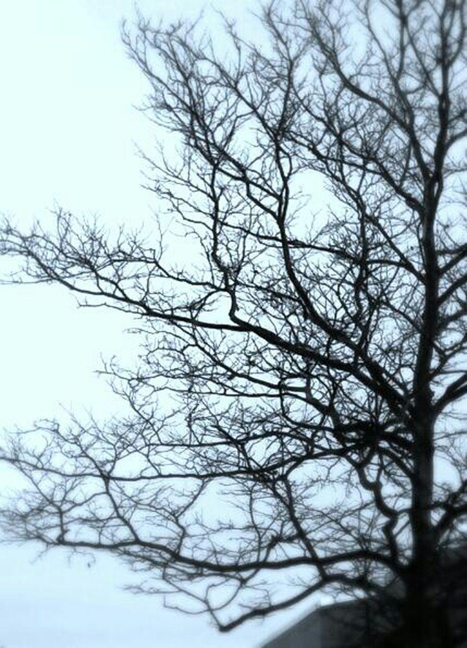 Winter gloom...