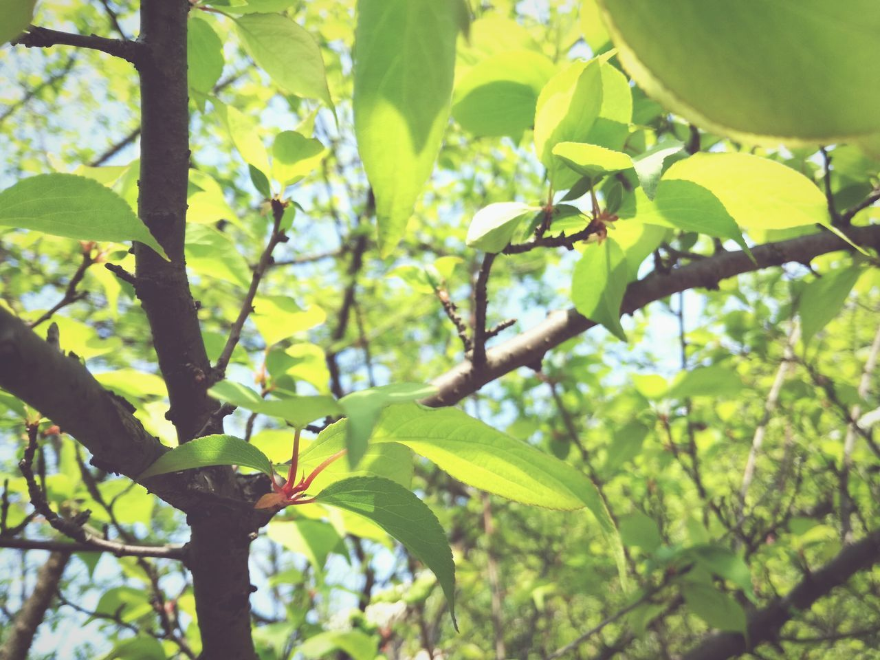 leaf, growth, tree, nature, green color, day, branch, low angle view, no people, outdoors, beauty in nature, plant, close-up, freshness