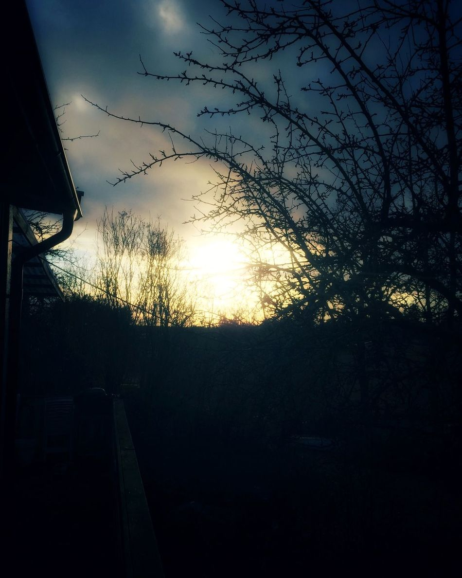 From My Point Of View Good Afternoon Silhouette Beauty In Nature Cloud - Sky Nature Tree Winter EyeEm Nature Lover